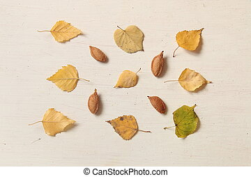 Fall. Autumn composition. with leaves