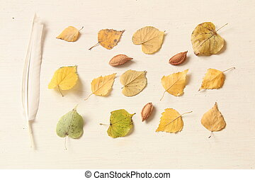 Fall. Autumn composition. with leaves, nuts and feather.