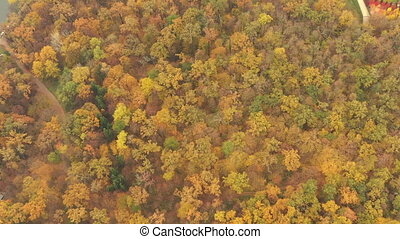 Drone flight over autumn fall forest with yellow leaves of bright orange color. Fall Autumn foliage season trees in temperate deciduous forest - Drone flying Top View Reveal shot.