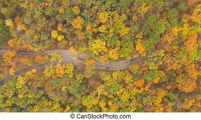 Fall Autumn foliage temperate deciduous forest with walking and bike paths - Drone Top View shot. Drone flight over autumn fall forest with walking and bike paths. ProRes HQ Full HD quality.