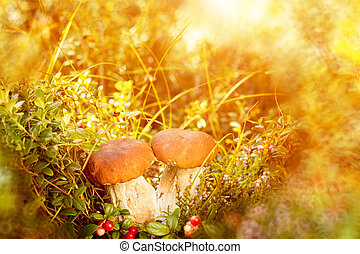 Mushrooms and berries in the forest