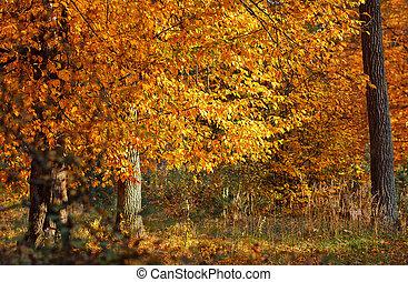 fall  autumn  leaves tree
