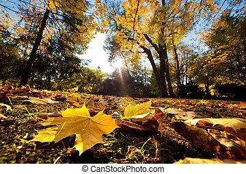 Fall autumn park. Falling leaves