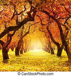 fall., autumn., parque, otoñal