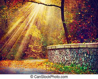 fall., autumnal, park., efterår træ, ind, sollys stråle