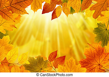 Beautiful nature autumn background - yellow, orange and red leaves, bright sunlight, season is fall