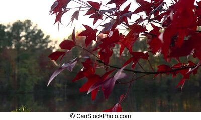 fall blazing color