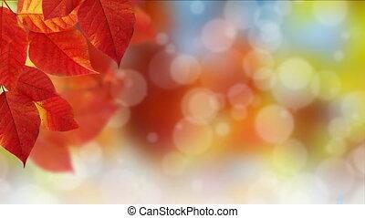 Fall Bokeh Dot Background