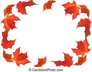 fall border maple leaves isolated on white background