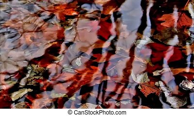 Fall Brancehes Reflection