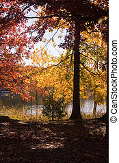 Fall by the lake 1 - A lovely fall scene beside a lake in ...