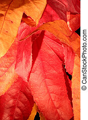fall color 1
