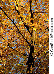 Fall Color, Cork Elm Grove 11