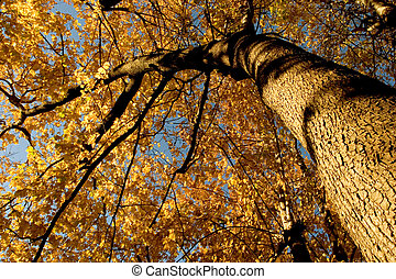 Fall Color, Cork Elm Grove 12