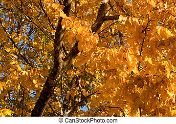 Fall Color, Cork Elm Grove 2