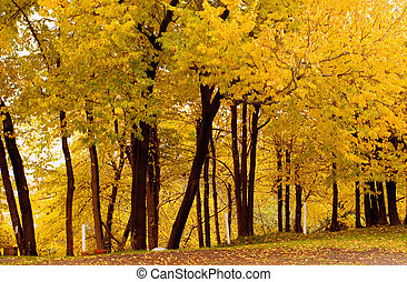 Fall Color, Cork Elm Grove1 - Photo of some fall color taken...