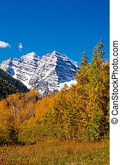 Fall Color in Aspen Colorado