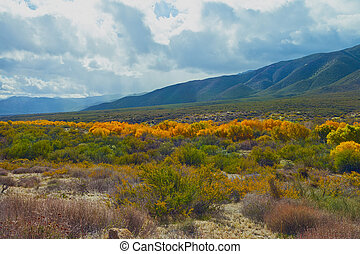 Warner Springs - Fall color in the valley at Warner Springs...
