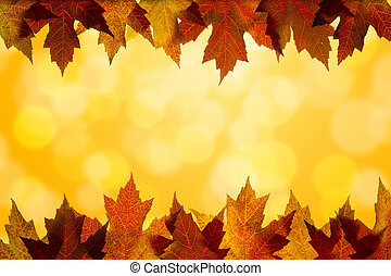 Fall Color Maple Tree Leaves on Blurred Sunlight Background Border Top and Bottom