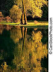 Fall color tree reflected in Crnojevica river, Montenegro