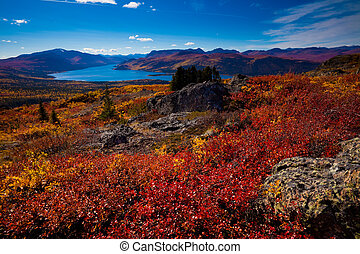 Fish Lake, Yukon Territory, Canada - Fall-colored boreal ...