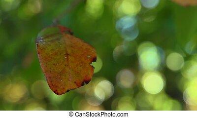 Fall colored leaf
