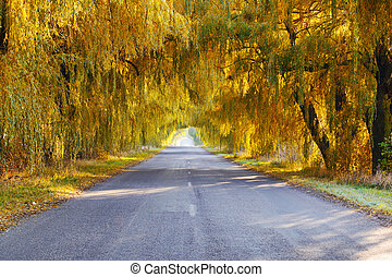 Fall colored trees along a road