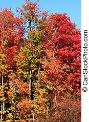 A copse of trees with fall colors