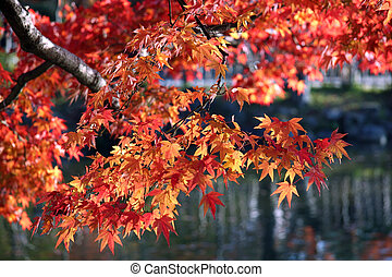 A tree branch with vibrant red and orange leaves.