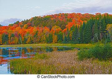 Fall colors Algonquin Park, Ontario, Canada.