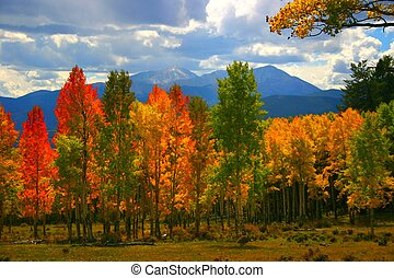 Aspen trees glow in shades of red, orange and yellow in setting sunshine of Autumn in the Colorado Rocky Mountains. (This image is exclusive to Canstock Photo. com)