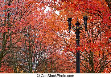 Fall Colors at Portland Oregon Downtown City Park