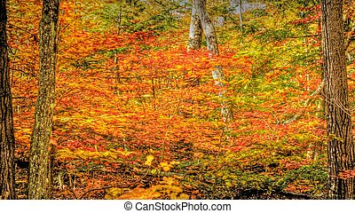 Fall colors background