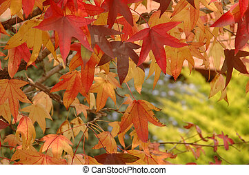 Fall colors - Beautiful autumm colors of tree leaves.