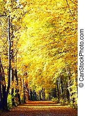 Fall colors - Beautiful fall pathway.