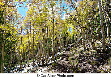 Fall colors in Great Basin National Park
