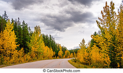 Fall Colors in Jasper National Park - Fall Color Trees along...