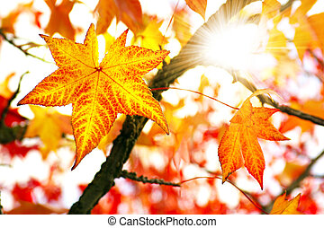 Fall Colors - Nature background of bright and colorful Fall ...