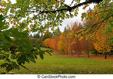 Fall Colors of Maple Trees