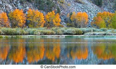 fall colors, vibrant aspen reflecti