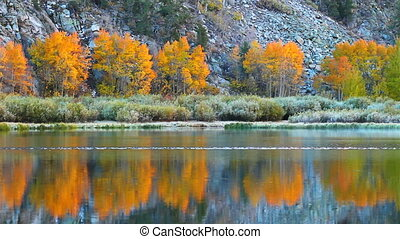 fall colors, vibrant aspen reflecti
