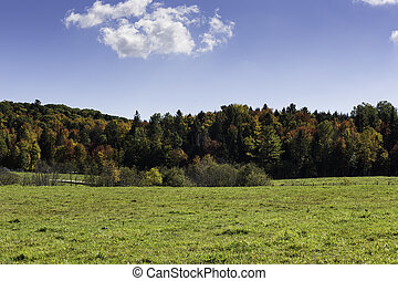Fall colors with a blue sky