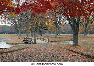 Fall Colors with Japanese Red Maples in Autumn