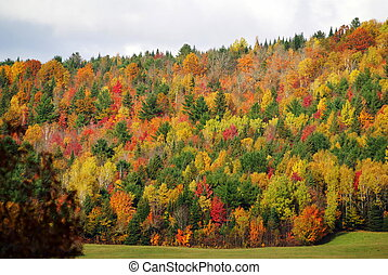 Fall Colours - A mountian with fall colours