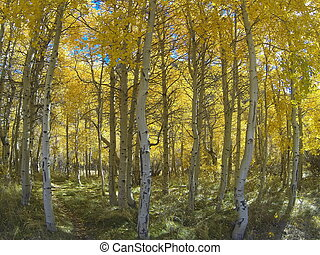 Fall colours Eastern sierras