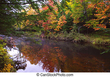Fall Colours - Fall colours with mist on a stream in New ...
