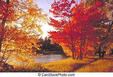 fall colours - if this looks saturated it was double...