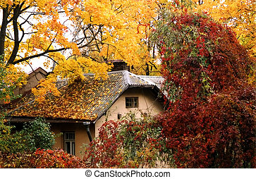 Fall colours - Little cottage covered in yellow and red ...