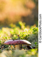 Fall Colours - Mushroom Growing at Vivid Forest Bed