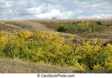 fall colours - prairie landscape during fall in alberta ...